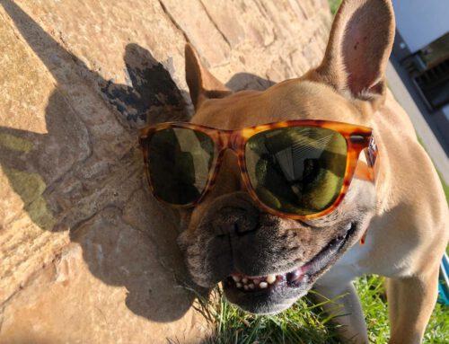 Heiße Tage – Coole Hunde